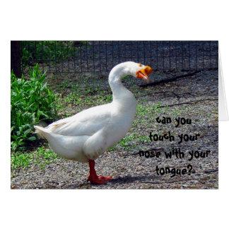 Silly Goose Birthday Greeting Card