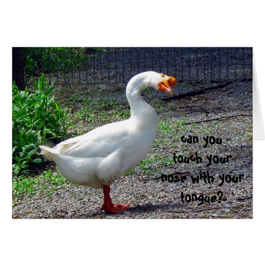 Silly Goose Birthday Greeting Card