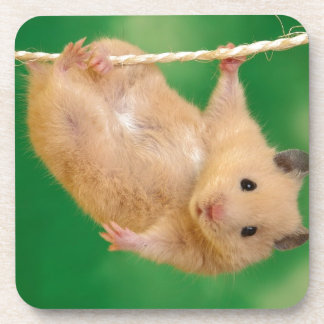 silly hampster beverage coaster