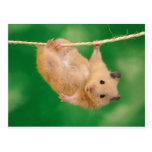 silly hampster postcard