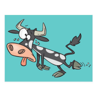 silly hot cow cartoon character post card