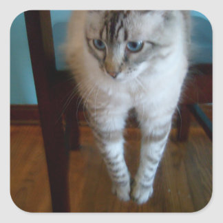 silly kitty hanging legs off chair stickers