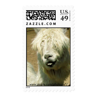 Silly Llama Postage Stamp