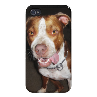 Silly Pitbull Portrait Cover For iPhone 4