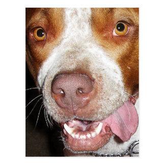 Silly Pitbull Portrait Postcard