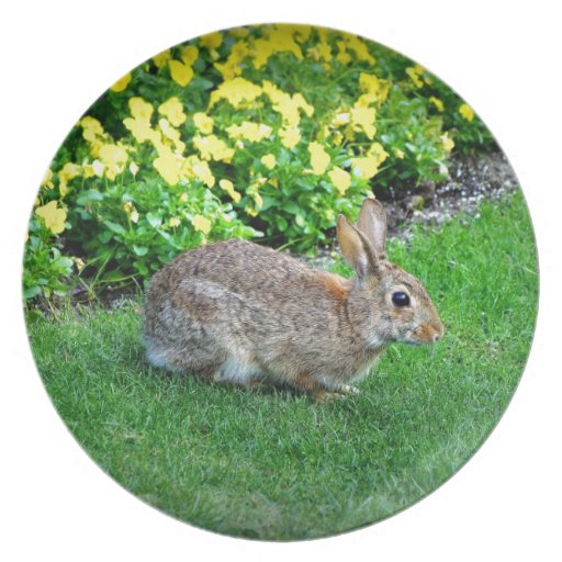 Silly Rabbit Dinner Plate
