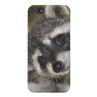 Silly Raccoon IPhone Case