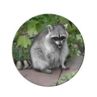 Silly Raccoon Posing Dinner Plate