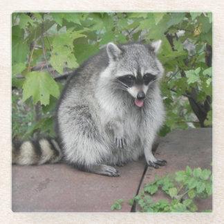 Silly Raccoon Posing Glass Coaster