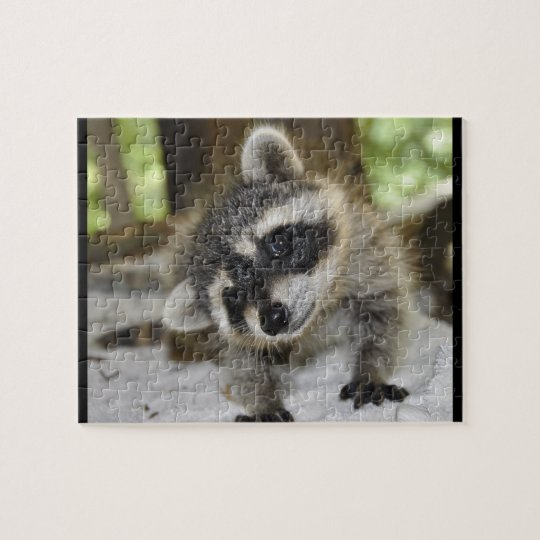 Silly Raccoon - Puzzle