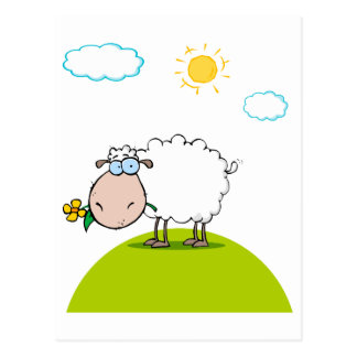silly sheep on a hill with a flower postcard