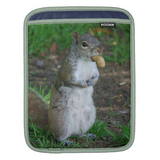 Silly Squirrel iPad Sleeves