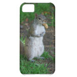 Silly Squirrel iPhone 5C Cover