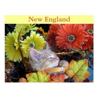 Silly Tabby Kitty Cat Kitten, Profile, Gerberas Postcard