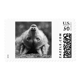 Silly Wolf Pup Postage