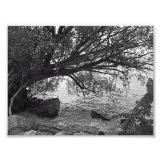 Silueta blanco y negro del árbol fotografías