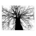 Silueta blanco y negro del árbol - postal