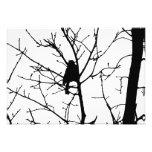 Silueta blanco y negro del chickadee en un árbol impresión fotográfica