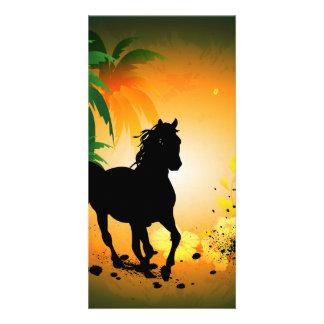 Silueta, caballo negro tarjetas fotográficas