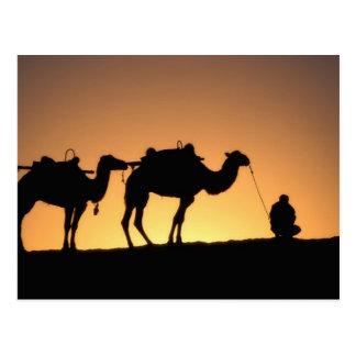 Silueta de la caravana del camello en el desierto postal