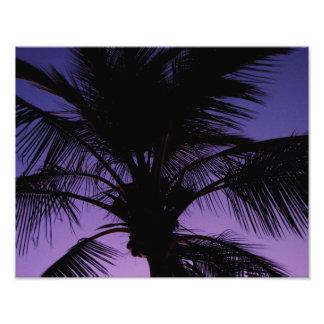 Silueta de la fronda de la palma fotografia