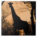 Silueta de la jirafa (camelopardalis del Giraffa) Teja