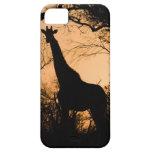 Silueta de la jirafa (camelopardalis del Giraffa) iPhone 5 Funda