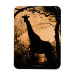 Silueta de la jirafa (camelopardalis del Giraffa) Imanes