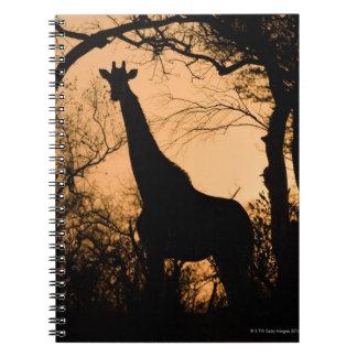 Silueta de la jirafa (camelopardalis del Giraffa) Libros De Apuntes