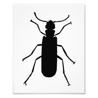 Silueta de la mosca de España Impresiones Fotograficas
