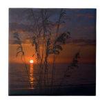 Silueta de la puesta del sol del Seagrass Azulejo