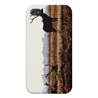 Silueta de los alces de Bull iPhone 4 Cobertura
