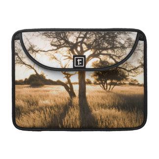 Silueta de los árboles del acacia en hierba. fundas para macbooks