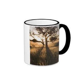 Silueta de los árboles del acacia en hierba. taza de dos colores