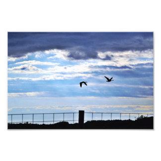 Silueta de los gansos de Canadá Fotografia