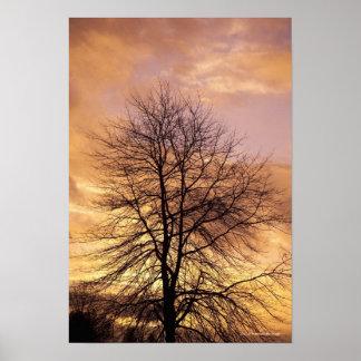 Silueta de un árbol con el cielo rosado y anaranja póster