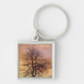 Silueta de un árbol con el cielo rosado y llavero cuadrado plateado