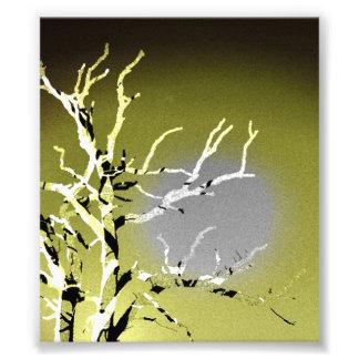 Silueta de una fotografía de muerte del árbol foto