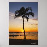 Silueta de una palmera por una puesta del sol anar póster