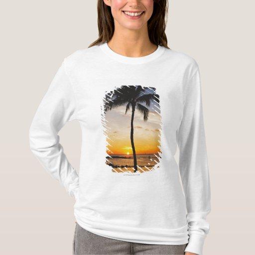 Silueta de una palmera por una puesta del sol playera