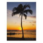 Silueta de una palmera por una puesta del sol postales