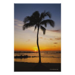 Silueta de una palmera por una puesta del sol póster