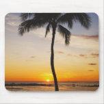 Silueta de una palmera por una puesta del sol tapetes de ratón
