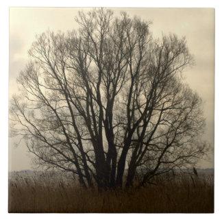 Silueta del árbol azulejo cuadrado grande