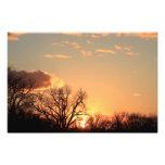Silueta del árbol de Kansas, con la ampliación de  Impresiones Fotograficas
