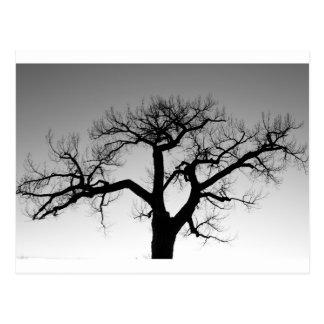 Silueta del árbol del invierno tarjetas postales