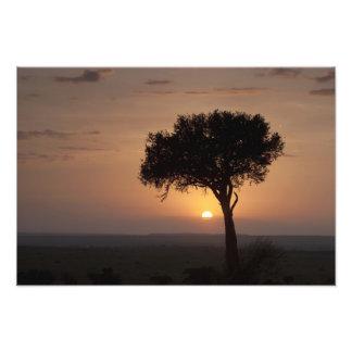 Silueta del árbol en el llano Masai Mara Arte Con Fotos