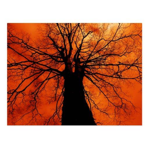 Silueta del árbol - postal