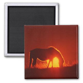 Silueta del caballo en la puesta del sol imán