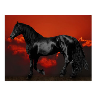 Silueta del caballo en la puesta del sol postales